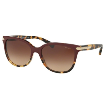 Coach HC8132 Sunglasses